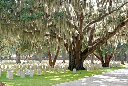 A picture of rows of upright headstones on a lawn divided by a tree-lined road within Beaufort's National Cemetery.